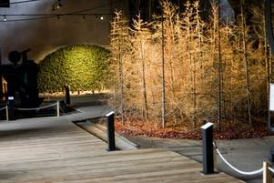 IMITATION AV SKOG. Återanvända julgranar hänger från taket och kommenterar förhållandet mellan konst och natur.
