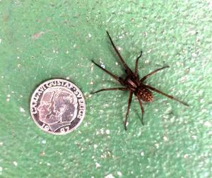 Spindeln har gått på gym i vinter. Cutty Sark har renoverats.