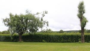 Två pilträd längs den andra gaveln. Länsstyrelsen kommer att gå vidare med ärendet i höst.