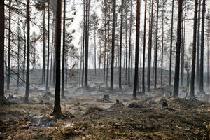 2014 härjades Västmanland av en av de största skogsbränderna hittills i modern tid.