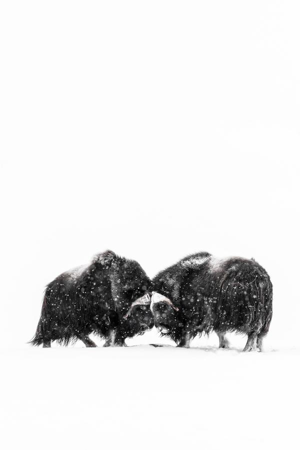 Bild av Niklas Virsén som håller föredrag om hur han som fotograf arbetar mellan fantasi och verklighet på Naturfotodagen i Västerås.
