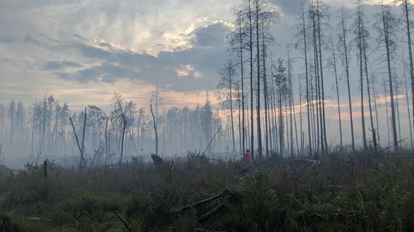 En skogsbrand kan ta fart genom någonting så litet som en glasskärva eller en fimp som någon slängt på marken. Men de kan också uppstå av naturliga skäl, t.ex. av att blixten slår ner.