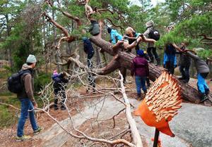 """En kreativ aktivitet är """"Konstig natur"""" där barn får skapa konstverk av saker de hittar i naturen.  Foto: Lars Hallgren"""