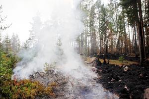 Det är inte säkert att gå i skogen efter sommarens skogsbränder. Foto: TT