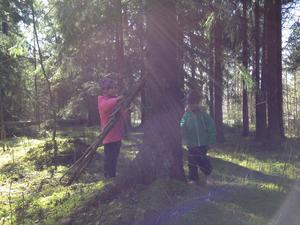 Påsklov och strålande sol! Alva och Vilma bygger en koja i skogen.