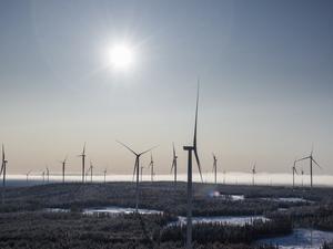 Sverige har aldrig tidigare producerat så mycket el som nu trots att vi lagt ner hälften av vår kärnkraft. Faktum är att vi varit nettoexportörer av el varje vecka de senaste två åren. Sverige har blivit norra Europas förnybara superbatteri. Den stora hjälten bakom den spektakulära utvecklingen är vindkraften, skriver fyra företrädare för Miljöpartiet. Foto: Magnus Hjalmarson Neideman, TT.