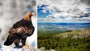 Bilden är ett montage. Foto:  Mostphotos.se /Robert Henriksson LTZ