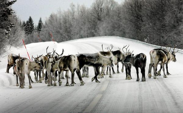 kommunstyrelsen hyser en oro för att upprättade avtal om rennäringen inte ska förlängas.