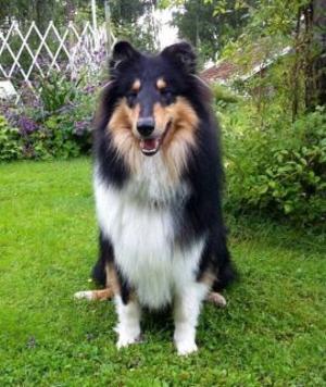 Amadeus är en 1-årig hanhund. Han har varit försvunnen sedan nyårsafton.