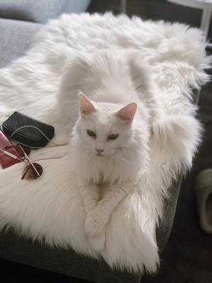 Här är min drottning Shakira. Hon kommer från gästrike katthem, vi har nu varit sambos i snart ett år. Jag brukar kalla henne för min egna fyrbenta väckarklocka! Bild: Maximilia Hollinder