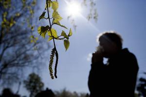 Med våren slår allergierna också ut i full blom.