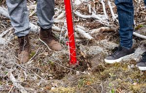Debatten om säsongsarbetare i skogen fortsätter.
