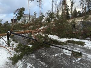 En av vägarna i Björnö-området var helt blockerad av träd under onsdagen.