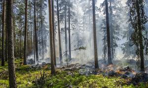 Här utförs en naturvårdsbränning i Hornal.