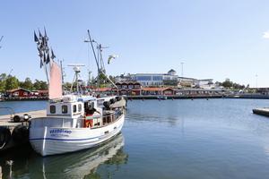 – Det skulle vara bra att säkerställa att det inte trålas efter torsk i Ålands hav. Fiske med garn är snällt mot beståndet, säger Ulf Bergström, forskare från SLU i Öregrund.