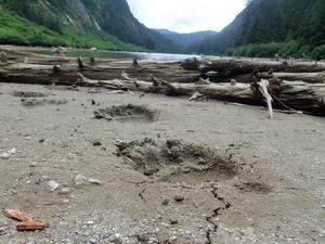 Det var den orörda naturen som lockade mest med Alaska, berättar Petter Rönneland. Foto: Privat