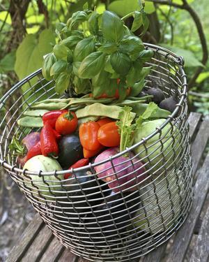 Nu kommer grönsakerna på bred front. Allt från rustika rödbetor till söta små paprikor att förgylla mat och sallader med.   Foto: Dan Strandqvist