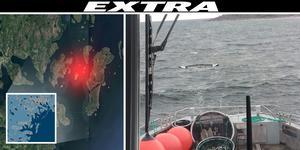 Den röda pricken visar var kanoten återfanns. Montage: Robin Brinck, Bild: Oskar Hammarstedt