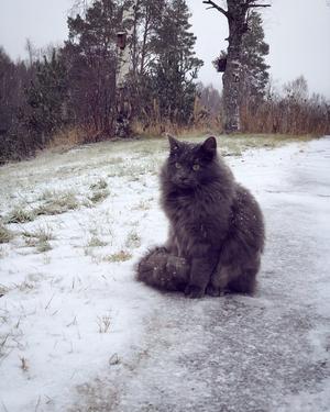 396) Hampus sitter och tittar på snön som faller. Foto: Hanna Larsson