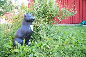 Jessica Erlangsen som bor på Snödroppstigen i Norberg har alltid älskat katter, men fick inte ha katt som barn under uppväxten på Skälby i Västerås. Det kompenserar hon nu med fyra katter samt en trädgårdskatt.