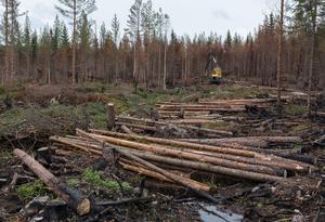 Foto: Erik Nyberg/Sveaskog. Den brandskadade skogen i Ängraområdet avverkas och fraktas bland annat till sågverket i Färila. Skogsbolaget Sveaskog hoppas att det ska bli klart innan vintern.