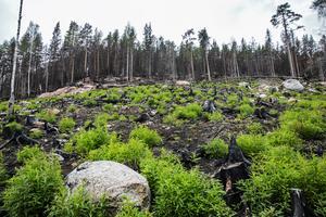 Det finns omkring 2 000 växter, svampar, insekter och andra djur som får lättare att överleva om det får brinna i naturen med jämna mellanrum, eller minst vart femtionde år. Allt enligt skogsvårdsprojektet Taiga, som bland annat jobbar med kontrollerad skogsbränning.
