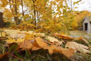 Höst och  mängder av löv på gräsmattan, är ingen favorit hos Anders
