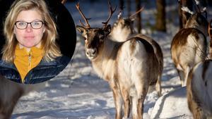 Therese Kärngard (S) som är kommunalråd i Bergs kommun och ordförande i kommunens samiska råd. Bilden är ett montage.Foto: Arkiv / Maja Sigfeldt.