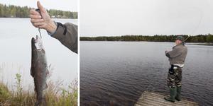 Så länge vattnet inte blir för varmt går det att fånga den kallvattenälskande regnbågen med ett flugspö från land i Malmsjön.