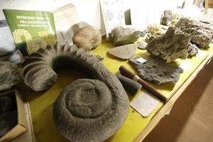 Exempel på flera miljoner år gamla fossil.