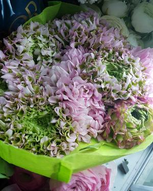 Foto: Jennie OlssonI väntan på egna blommor att plocka in i stora buketter är ju snittblommor från blomsterbutikerna en bra tröst. Mer vårkänsla än med de här ljuvliga Ponponranunklarna från Hjärtats rum i Dala-Järna kan man nog inte få.