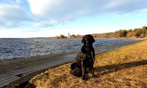 En trevlig tur till Rättvik med fina hunden Elli. Foto: Sven-Olof Eriksson