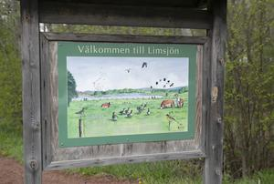 Limsjön blev Natura 2000-området främst för sitt rika fågelliv.