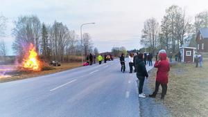 Majbrasa i Jämtlands Nyby. Ett säkert vårtecken sedan mer än 80 år. Foto: Mattias Brännström och Eva Blom