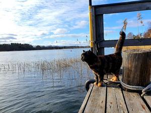 Tigris njuter av vårsolen på Solö. Foto: Pernilla Gerdlöf Stefansson
