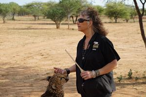 Ett tv-program om gepardstiftelsen Cheetah Conservation Fund och dess grundare Laurie Marker förändrade livet för Göran Lindström från Bergeforsen.  Foto: Dag Jonzon