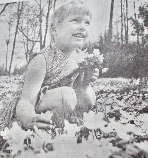 Sexåriga Vetlandaflickan Anette Svensson hittade ett vitsippehav i Tångerda i maj 1971 och passade på att plocka en fin bukett till mamma och pappa.