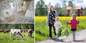Erika Källgren med barnen Tyra och Malva har precis skördat rabarber i trädgården. Familjen stortrivs i sitt lantliga hus.