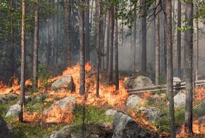 260 hektar brändes. Foto: Erik Nyberg