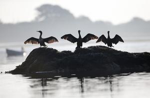 AP Photo/Robert F.