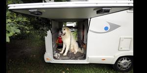 Att resa med hund kräver mycket förberedelse. Foto: Tomas Oneborg / SvD / SCANPIX