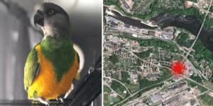 Bilden av den försvunna papegojan samt hans senast sedda plats. Kartbild: Google Earth