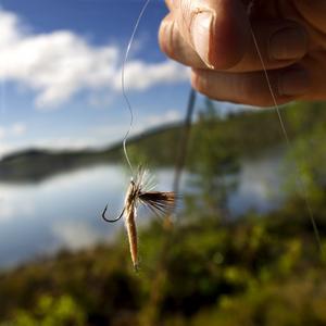 Rocky-flugan imiterar en nykläckt sjösandslända som ligger på vattnet och torkar vingarna.
