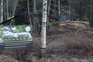 På måndagsmorgonen startade trädfällningen längs Myrvägen i Djurås där 16 bostadsrätter ska vara inflyttningsklara senast i december 2020.