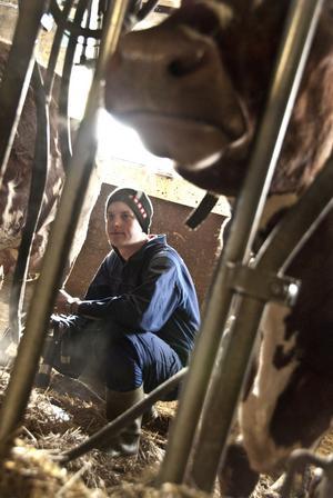 Robin Hagemo gillar variationen som följer med årstiderna i lantbruksyrket, och jobbet med djuren.