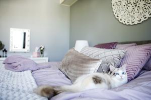 Ophelia är en ettårig ragdoll. Hon trivs alldeles utomordentligt bra i det ombonade sovrummet.
