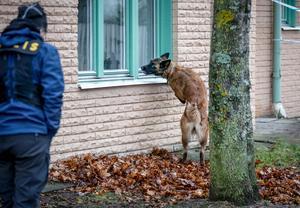 En av de specialsökhundar polisen använde på brottsplatsen.