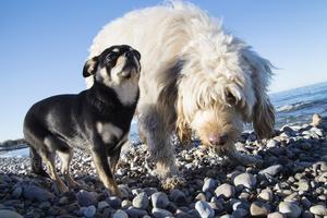 Astrid Lindgren och Zlatan har fått pryda frimärken. Nu får alla hundar i Sverige chansen!