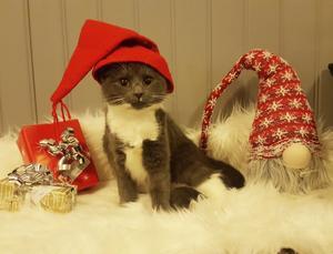 96) Rut väntar in tomten och juletid. Foto: Sandra Haglund Wennberg