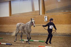 Mellan etapperna måste hästarna undersökas av veterinärer. De avgör sedan om ekipaget får fortsätta tävlingen eller inte, beroende på hästens status.